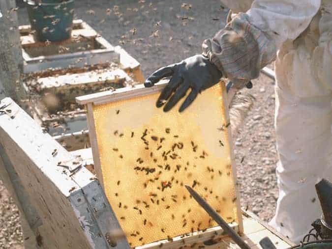 Imagen de cómo se extrae la miel en el panal